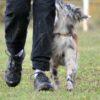 Définition de l'apprentissage canin